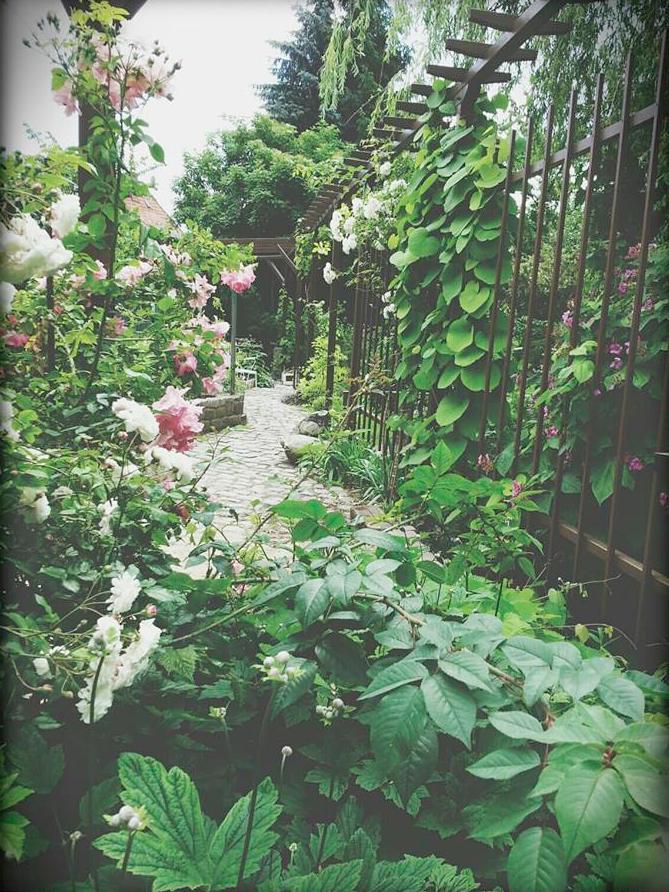 ORBANISM GASTFREUNDSCHAFT | Gartenlesung im Rahmen von #verlagebesuchen