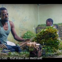 ARTE-/WDR-Doku: Grünes Gold - Khat erobert den Weltmarkt
