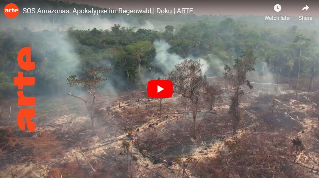 ARTE-Doku: SOS Amazonas - Apokalypse im Regenwald