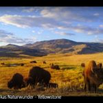 ARTE-Doku: Amerikas Naturwunder - Yellowstone