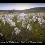 ARTE-Doku: Geheimnisvolle Wildblumen - Feld- und Wiesenblumen