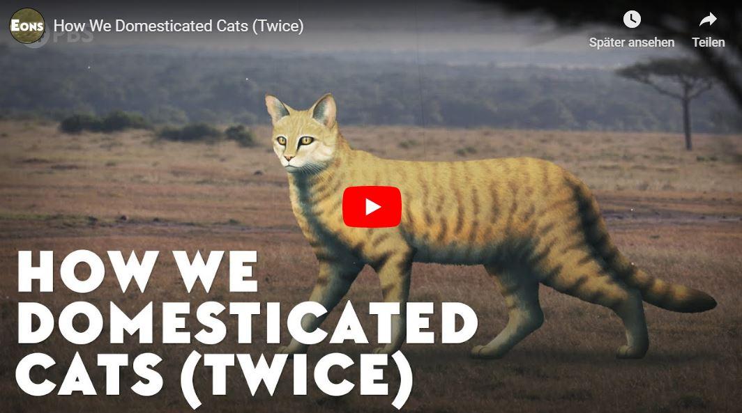 PBS-Kurzdoku: How We Domesticated Cats (Twice)