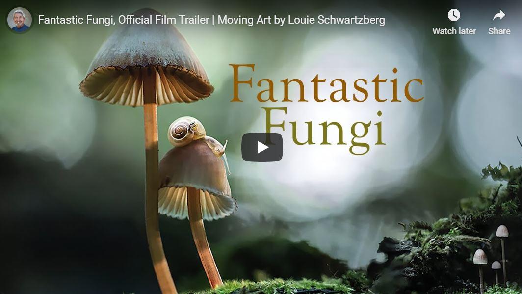 Dokufilm: Fantastic Fungi (Trailer)