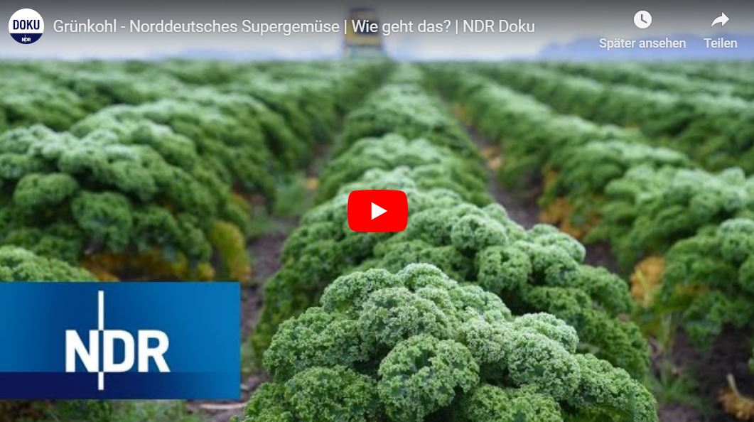 NDR-Doku: Grünkohl - Norddeutsches Supergemüse