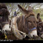 ARTE-Doku: Dem Esel auf der Spur