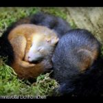 ARTE-Doku: Geheimnisvolle Eichhörnchen