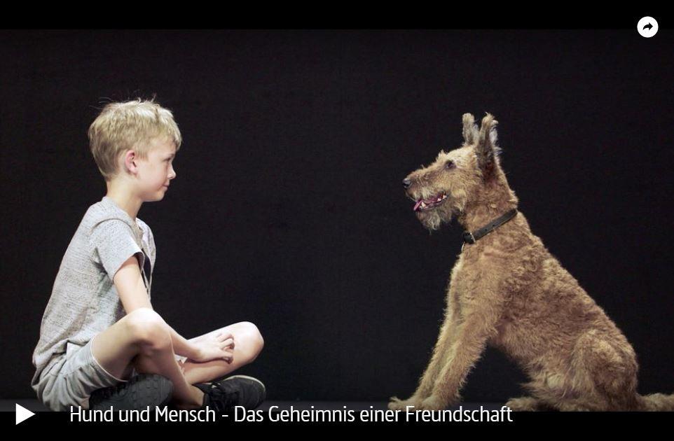 ARTE-Doku: Hund und Mensch - Das Geheimnis einer Freundschaft