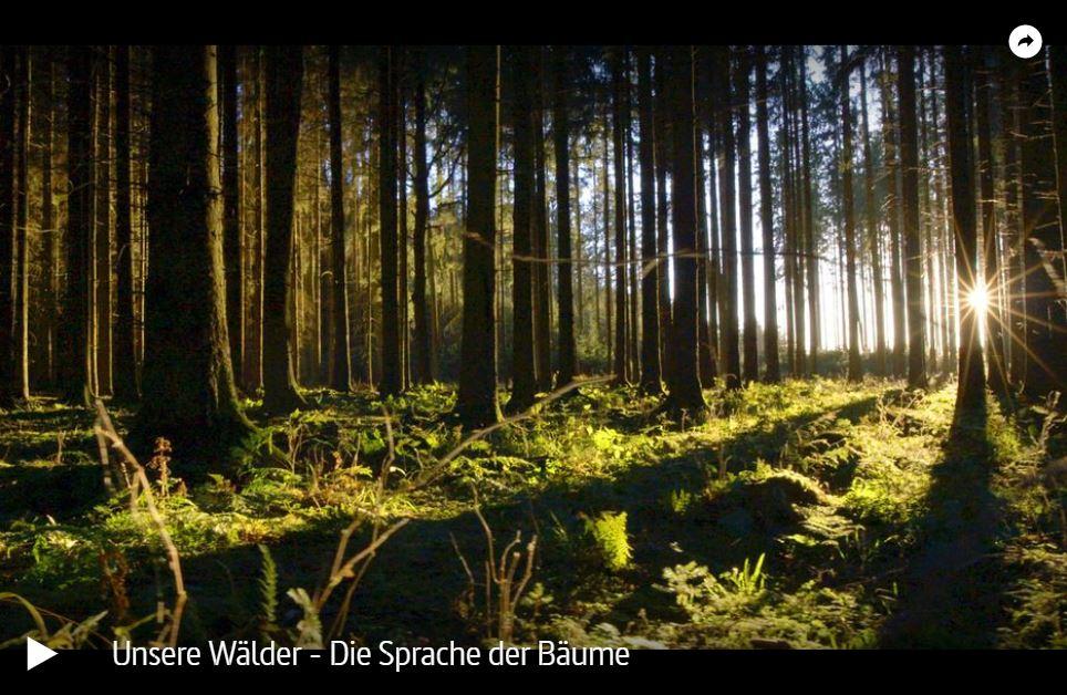 ZDF-Doku: Unsere Wälder (3 Teile)