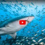 ARTE-Doku: Die Welt der Haie - Meister der Jagd