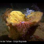 ARTE-Doku: Extreme der Tiefsee  - Eisige Abgründe