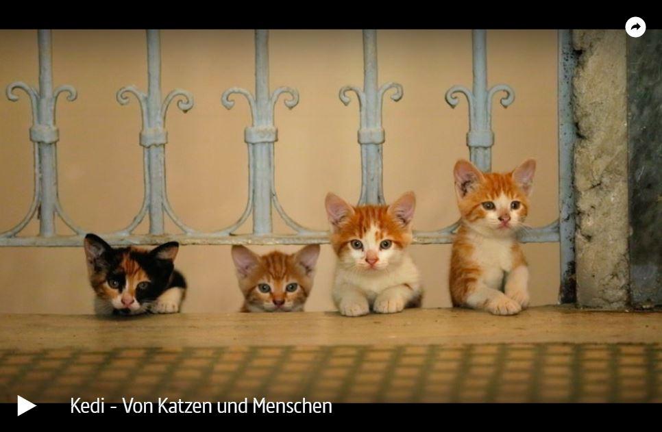 ARTE-Doku: Kedi - Von Katzen und Menschen