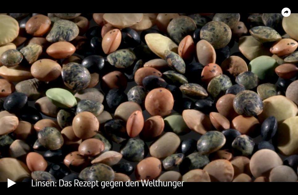 ARTE-Doku: Linsen - Das Rezept gegen den Welthunger