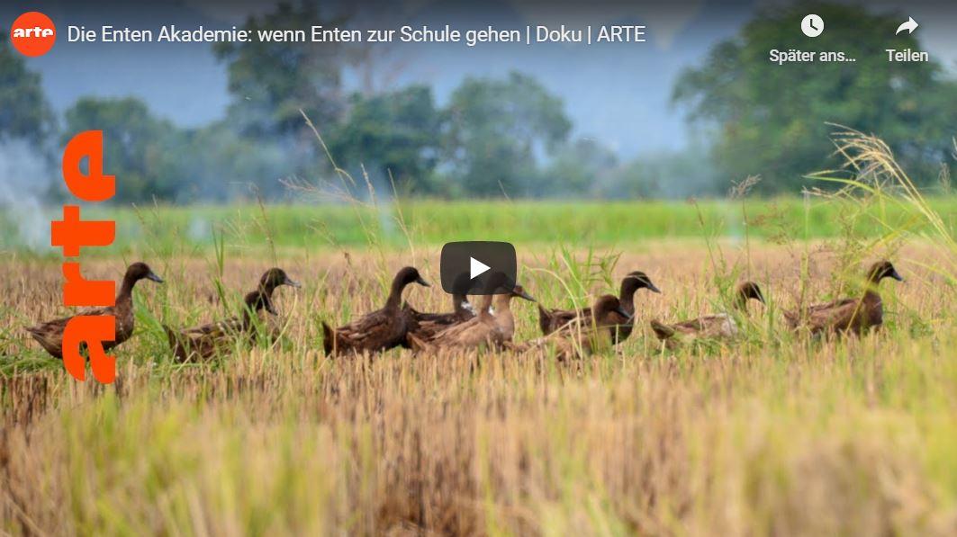 ARTE-Doku: Die Enten Akademie - Wenn Enten zur Schule gehen