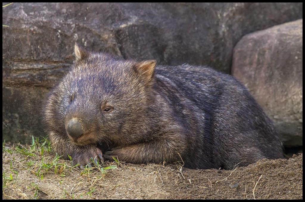 ARTE-Doku: Australien - Im Land der Wombats
