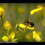 ARTE-Doku: Das große Insektensterben