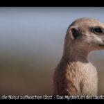 ARTE-Doku: Die geheime Sprache der Tiere - Wenn die Natur aufhorchen lässt (3 Teile)