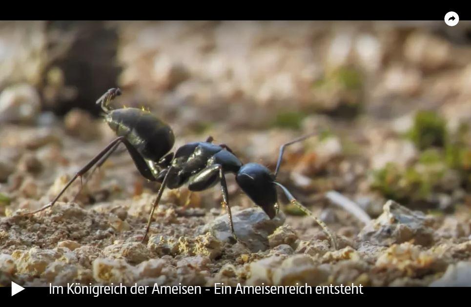 ARTE-Doku: Im Königreich der Ameisen (2 Teile)