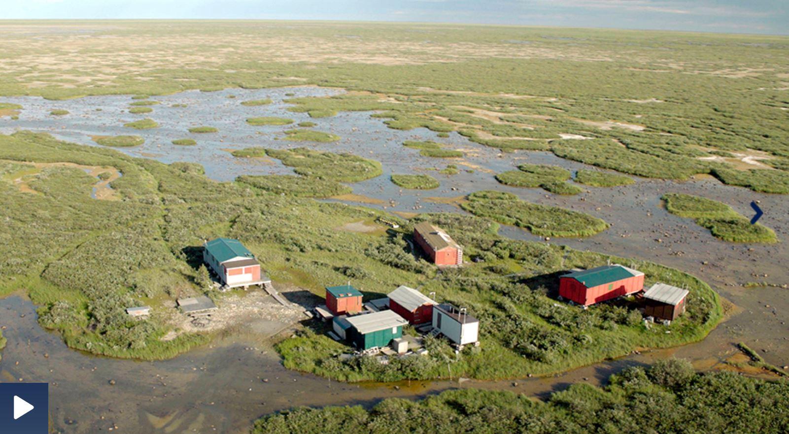 ARD-Doku: Eisbären und Belugas - Unterwegs in Kanadas Nationalpark Wapusk