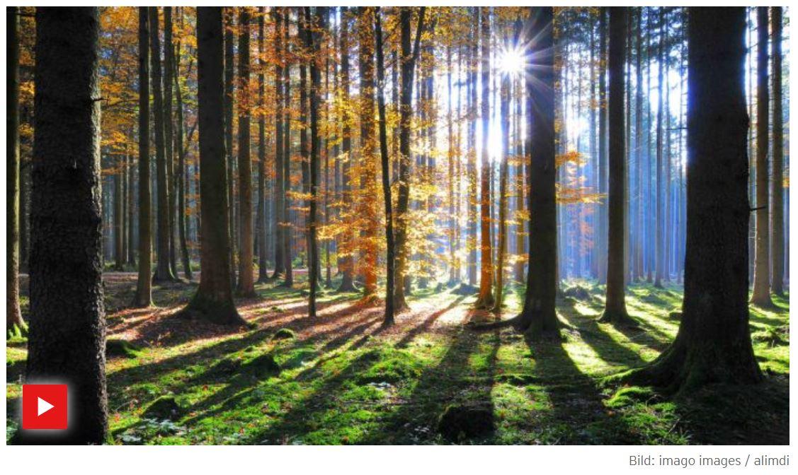 RBB-Doku: Leben unter Bäumen - Ein Jahr im Wald