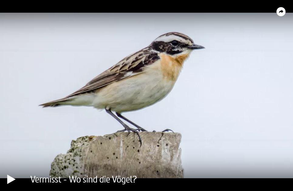 ARTE-Doku: Vermisst - Wo sind die Vögel?