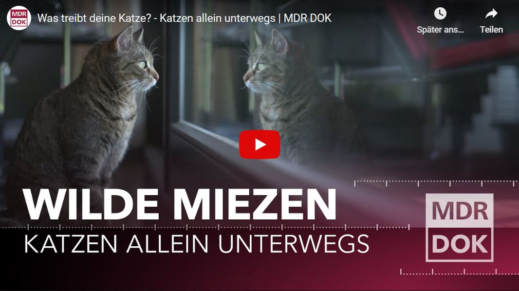 MDR-Doku: Was treibt deine Katze? - Katzen allein unterwegs