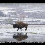ARTE-Doku: Yellowstone - Ein Nationalpark und seine vielen Gesichter (4 Teile)