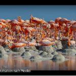ARTE-Doku: Zur Brutsaison nach Mexiko