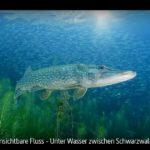 ARTE-Doku: Der unsichtbare Fluss - Unter Wasser zwischen Schwarzwald und Vogesen