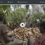 ZDF-Doku: Schokolade - Das bittere Geschäft