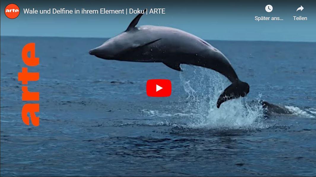 ARTE-Doku: Wale und Delfine in ihrem Element