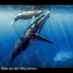 ARTE-Doku: Wenn Wale uns den Weg weisen
