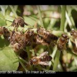 ARTE-Doku: Der Retter der Bienen - Ein Imker auf Sizilien