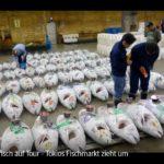 ARTE-Doku: Thunfisch auf Tour - Tokios Fischmarkt zieht um