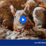 RBB-Doku: Von badenden Hörnchen und luftigen Akrobaten