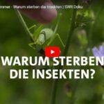 SWR-Doku: Der stumme Sommer - Warum sterben die Insekten