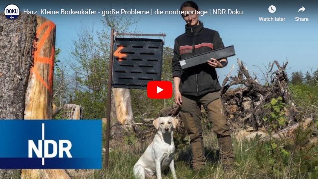 NDR Doku: Harz - Kleine Borkenkäfer, große Probleme