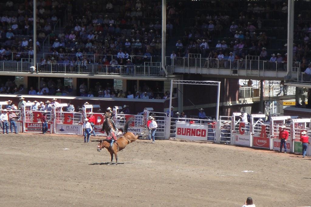 Calgary Stampede Rodeo - Saddle Bronc