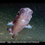 NDR-Doku: Haie eiskalt! Jäger zwischen Nordsee und Grönland