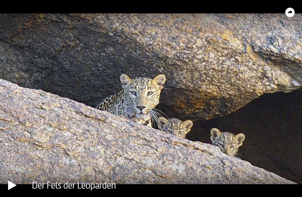 ARTE-Doku: Der Fels der Leoparden