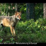 ARTE-Doku: Die Natur kehrt zurück - Renaturierung in Europa