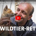 SWR-Doku: Jürgen und die Wildtiere - Rettung für Eichhörnchen, Igel und Co.