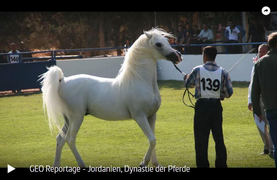 ARTE-Doku: Jordanien, Dynastie der Pferde