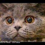 ARTE-Doku: Mörderische Mieze - Die Katze