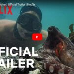 Netflix: Mein Lehrer, der Oktopus // Doku-Empfehlung von Kevin Kelly