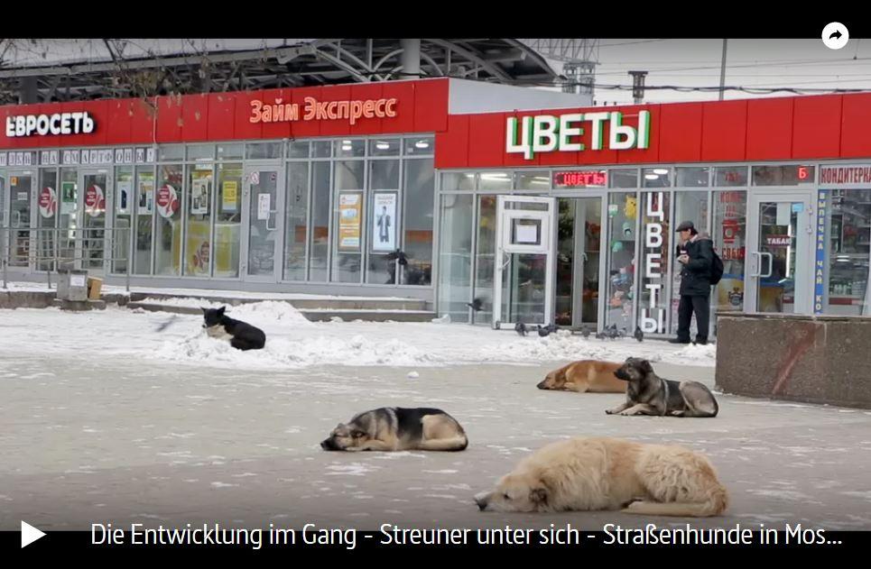 ARTE-Doku: Streuner unter sich - Straßenhunde in Moskau