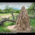 ARTE-Doku: Tierische Wohngemeinschaften