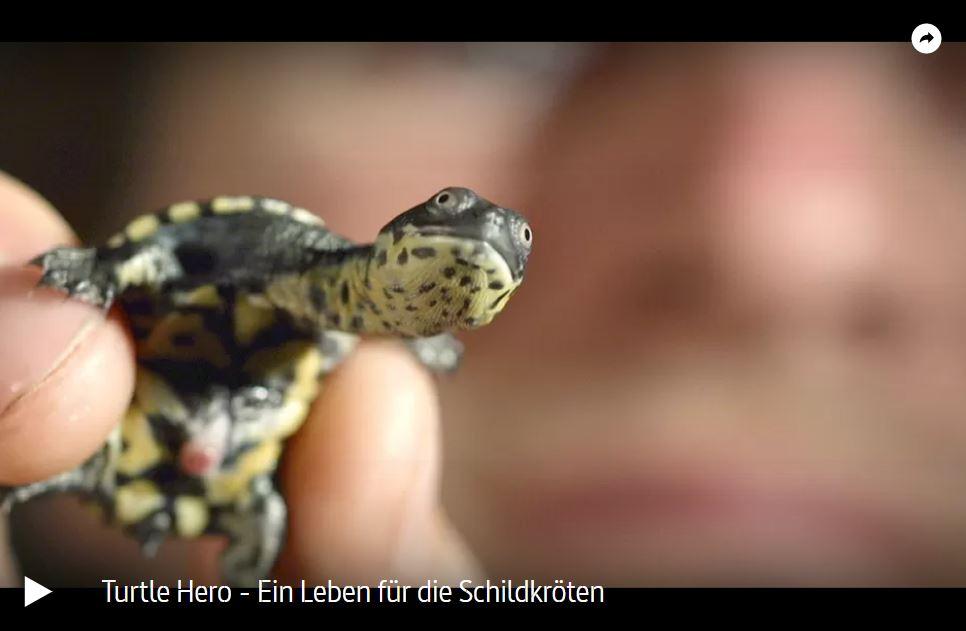 ARTE-Doku: Turtle Hero - Ein Leben für die Schildkröten