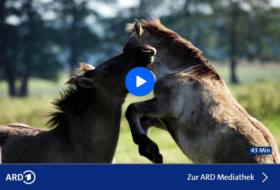 RBB-Doku: Das Oder-Delta - Grenzenlose Wildnis an der Ostsee