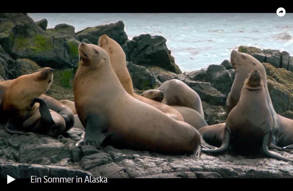 ARTE-Doku: Ein Sommer in Alaska