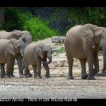 ARTE-Doku: Tiere in der Wüste Namib - Faszination Afrika